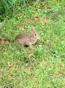 I know this post is a little long-winded, so here's a picture of a bunny.